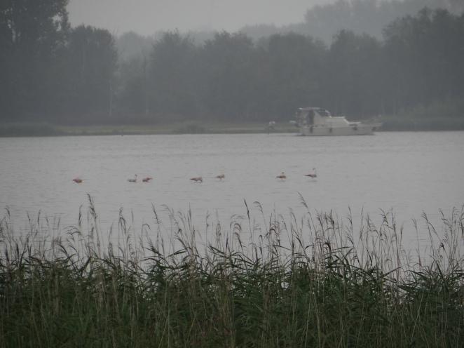 lauwersmeer 009